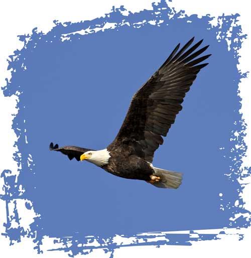 Sichtbarkeit erhöhen Adler