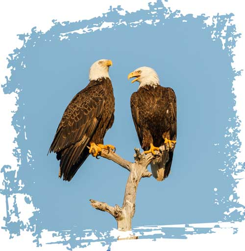 Sichtbarkeit erhöhen zwei Adler